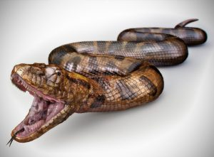 Dorling Kindersley | Anaconda Snake | Stas3dArt | London