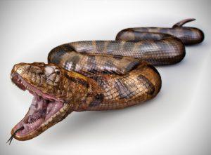 Dorling Kindersley | Anaconda Snake | Stas3dArt | London